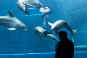 Dolphins in aquapark interested in GoPro camera